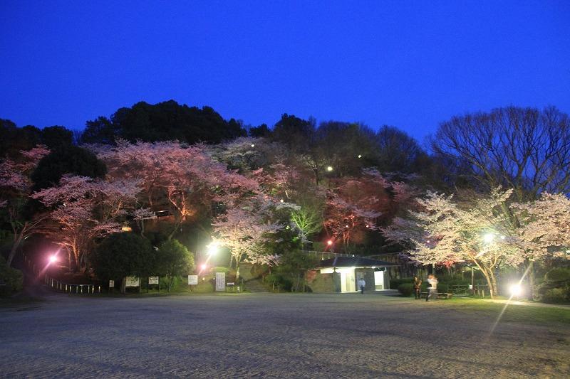 長野公園さくらと光の回廊.jpg