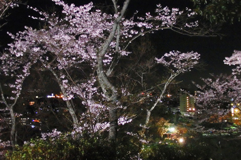 2016-4-2yozakura17-2.jpg