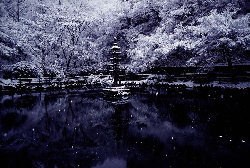 南海バス賞 「雪の蓮池」延命寺