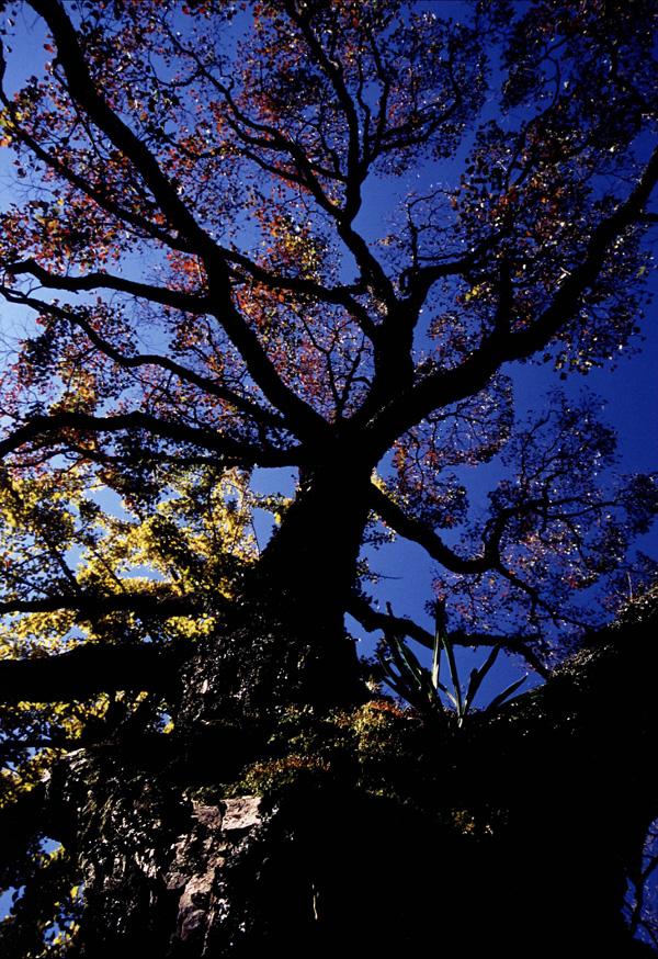 ノバティながの会長賞 「透ける秋」観心寺