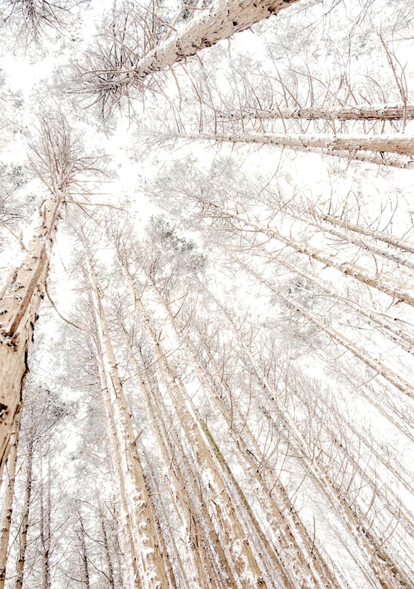 大阪芸術大学賞 「雪樹」金剛山