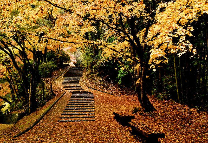 大阪写真材料商業組合理事長賞 「落葉の彩り」延命寺