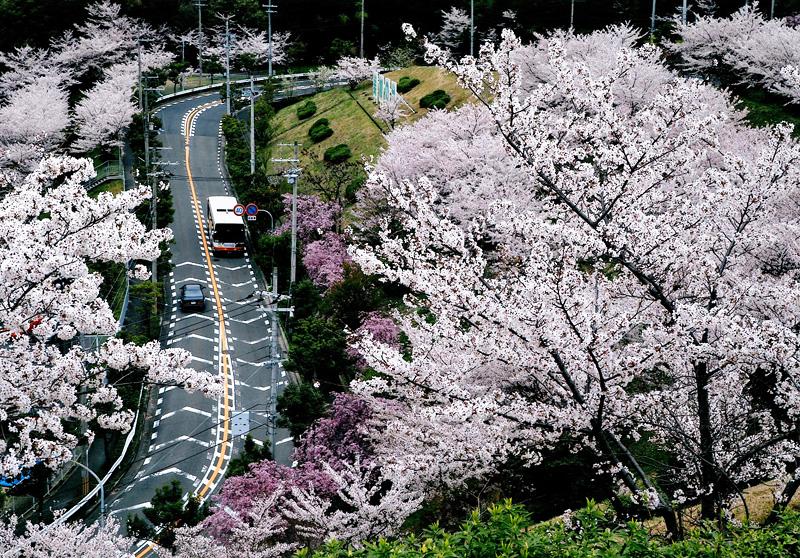 南海バス賞 「桜坂」美加の台