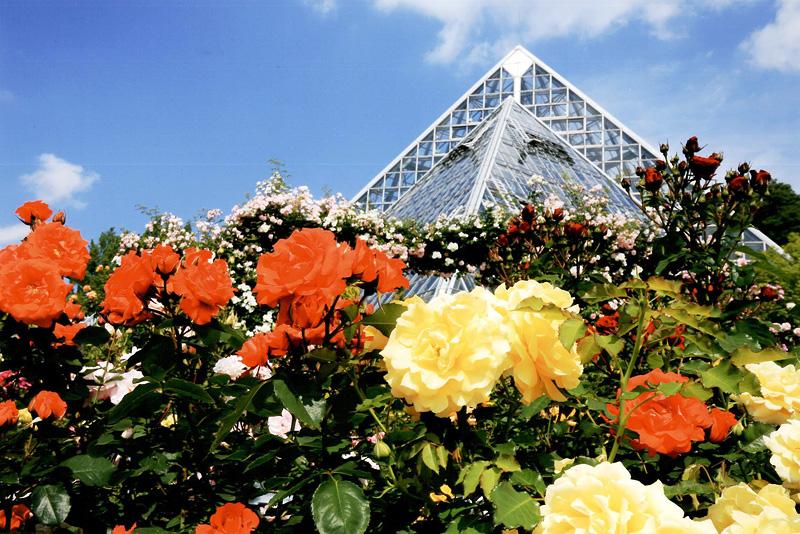 じゃんぼスクエアテナント賞 「バラ一色」花の文化園
