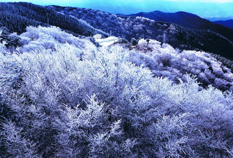 千早赤阪村議会議長賞 「霧氷輝く南尾根」金剛山
