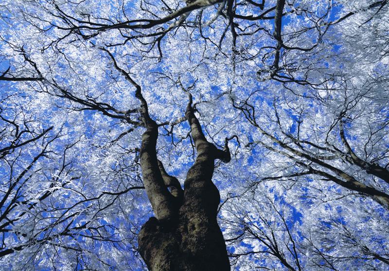 大阪観光局理事長賞 「樹氷花盛り」金剛山