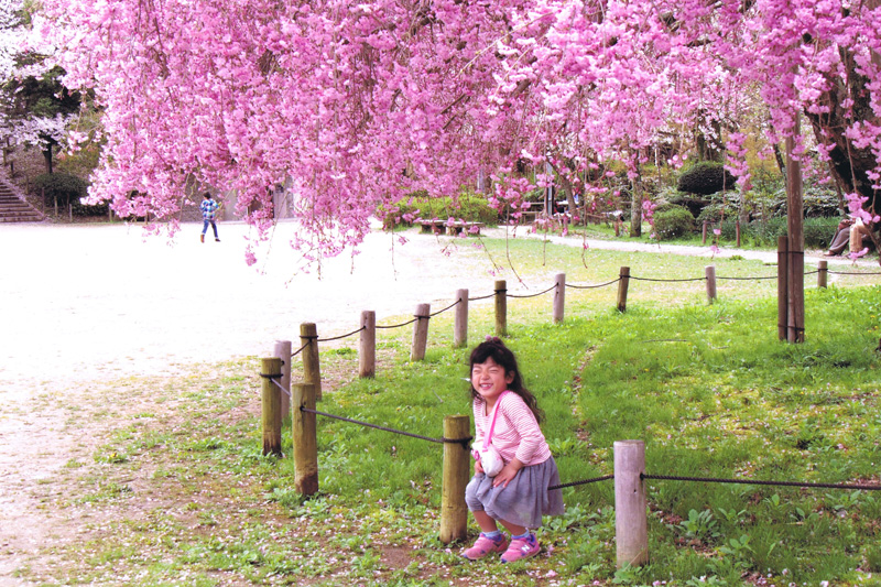 大阪写真材料商業組合理事長賞 「笑顔も満開」奥河内さくら公園