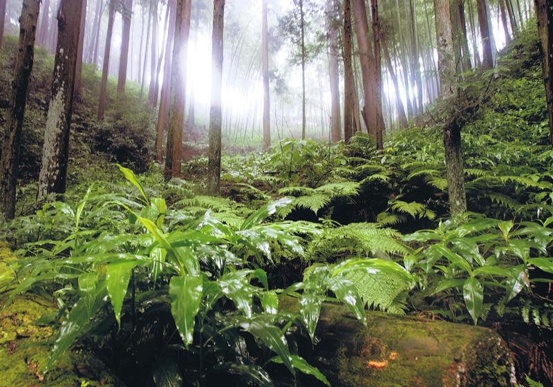 河内長野市公園緑化協会理事長賞 「静寂な森」千早赤阪村