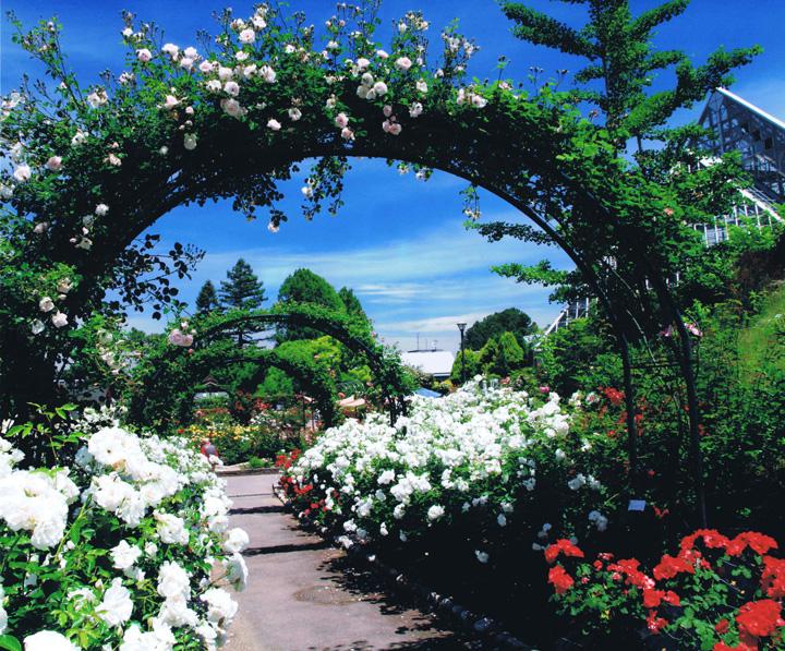 河内長野市長賞 「バラのプロムナード」 花の文化園