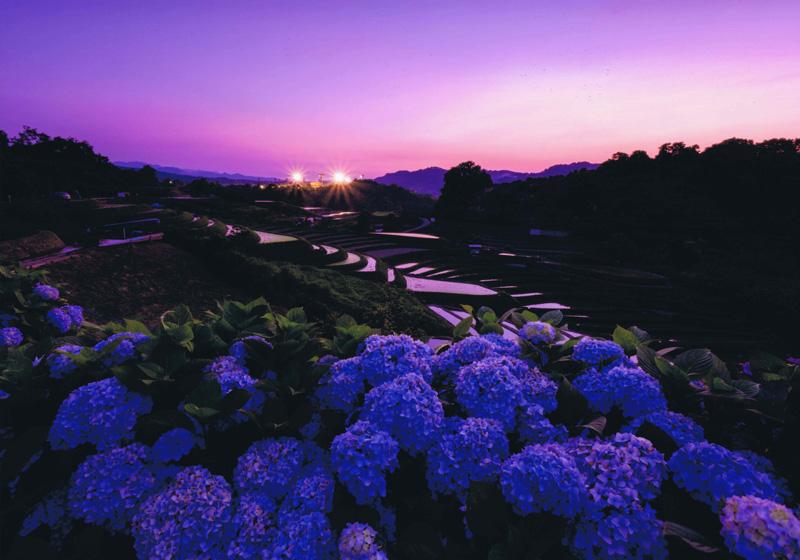 千早赤阪村観光協会長賞 「梅雨の晴れ間に」下赤阪の棚田