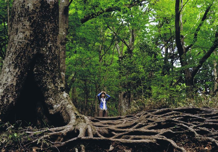 グランプリ 「ぶなの森」金剛山