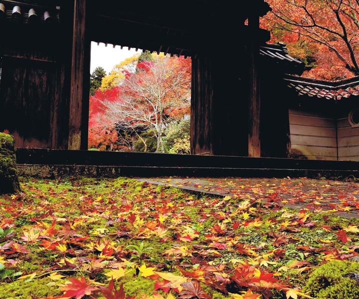 大阪観光局理事長賞 「紅葉の散華」延命寺