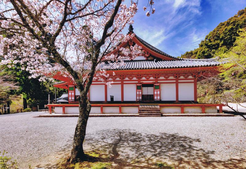 南海バス賞 「花影」観心寺