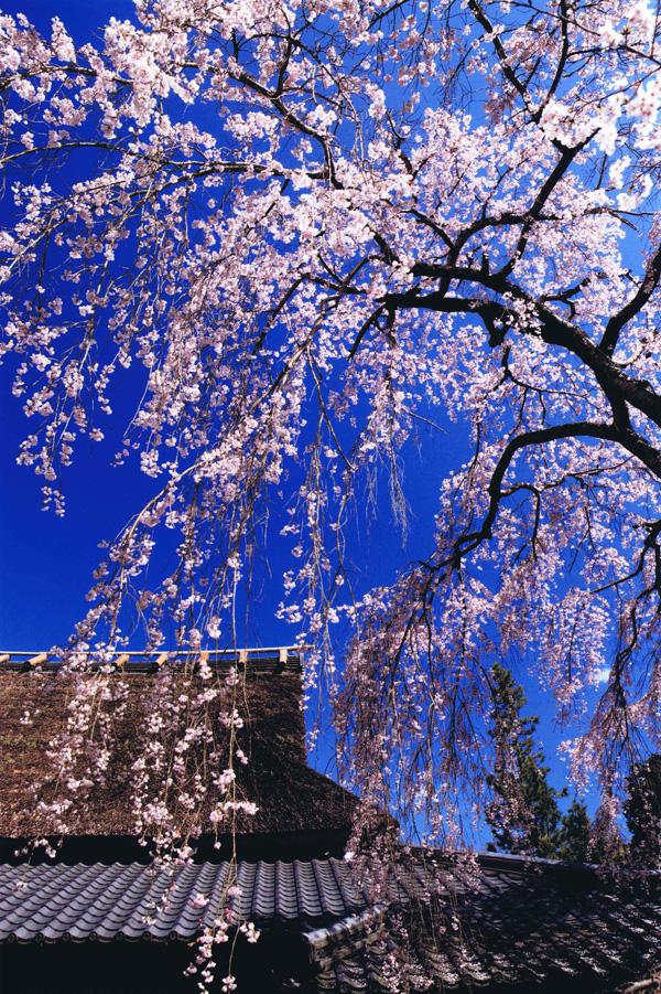 関西サイクルスポーツセンター賞 「宴」天野山金剛寺