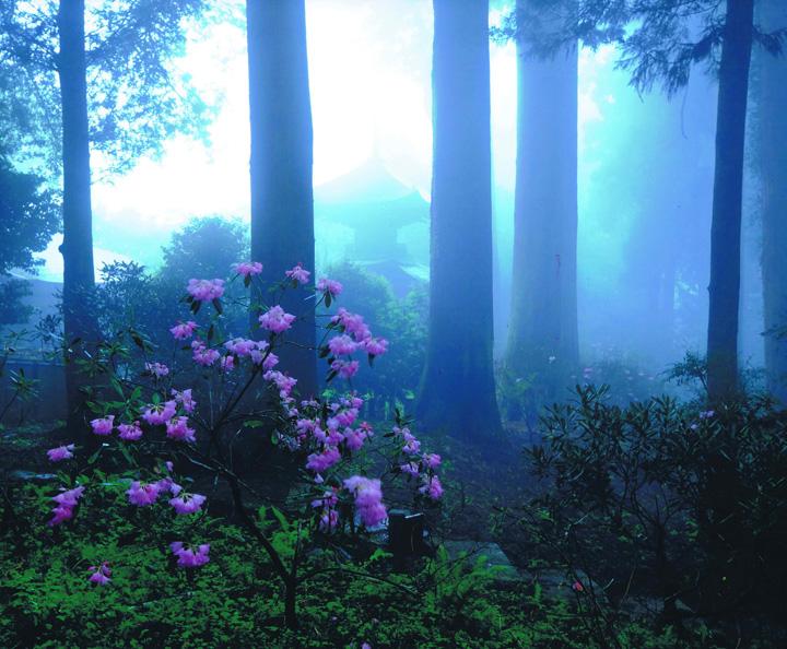 阪九フェリー賞 「霧に咲く」岩湧寺
