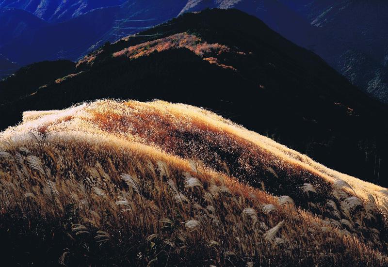 天野山カントリークラブ賞 「晩秋の光」岩湧山