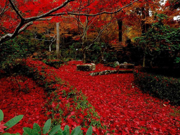 富士フイルム賞 「赤い情景」花の文化園
