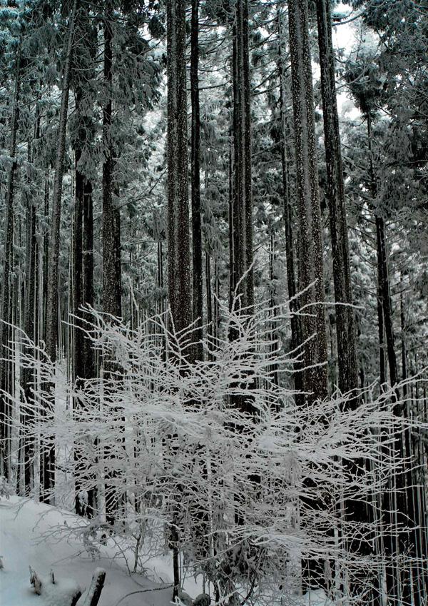 郵便局賞 「森のサンゴ」金剛山