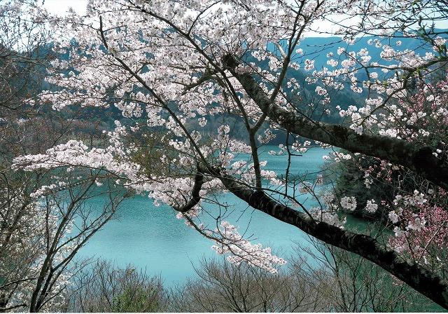 阪九フェリー賞 「ダムとサクラ」滝畑