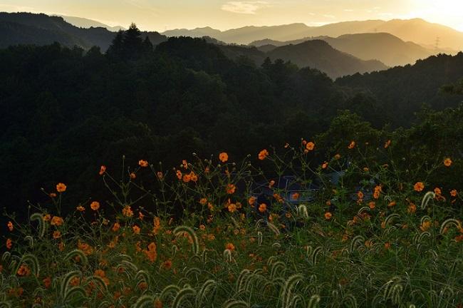 河内長野市観光協会長賞 「初秋の目覚め」美加の台