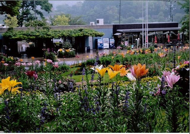 花の文化園賞 霧雨の中で花の文化園