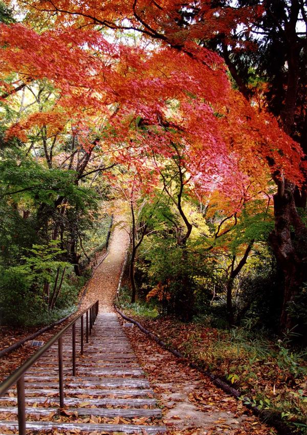 河内長野市観光協会長賞 「秋の散歩道」延命寺