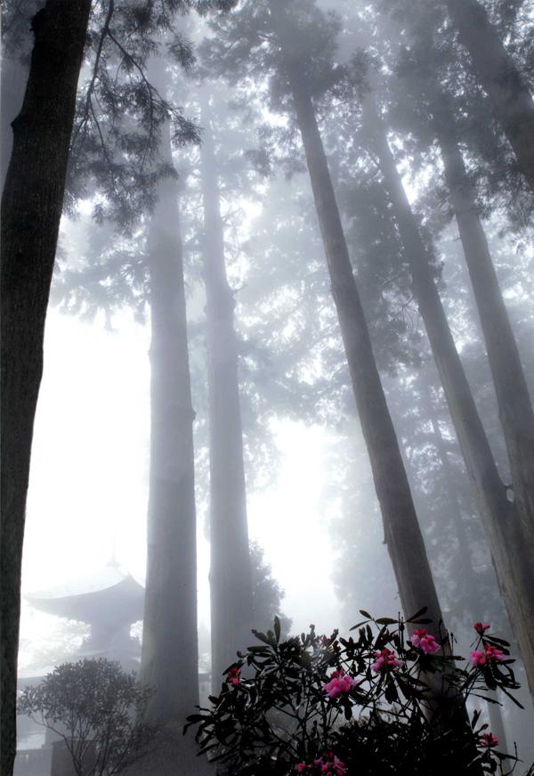 河内長野市市議会議長賞 「霧景」岩湧山