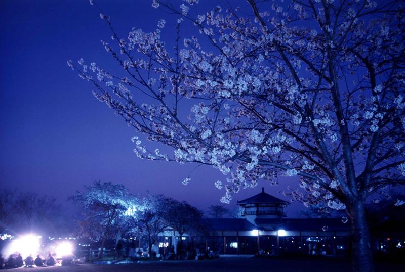 南海バス賞 「春の宵」長野公園