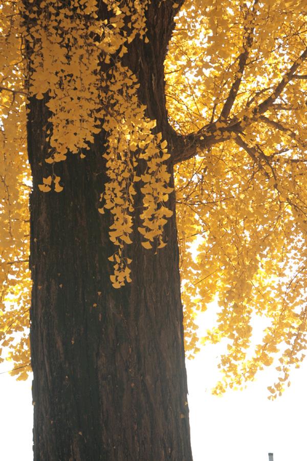 富士フイルム賞 技術賞 「光のカーテン」長野神社