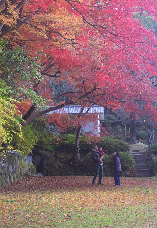 南海電気鉄道賞 「紅葉の下で」観心寺