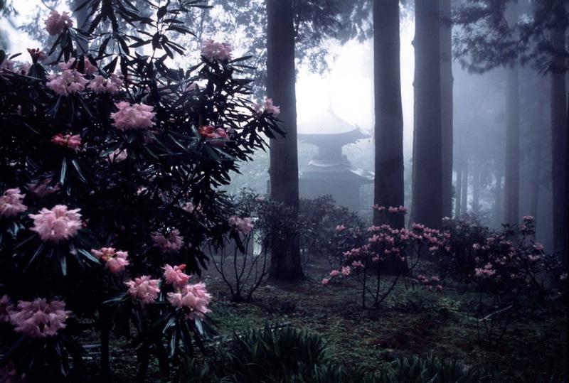 富士フイルム賞 技術賞 「花咲く多宝塔」岩湧寺