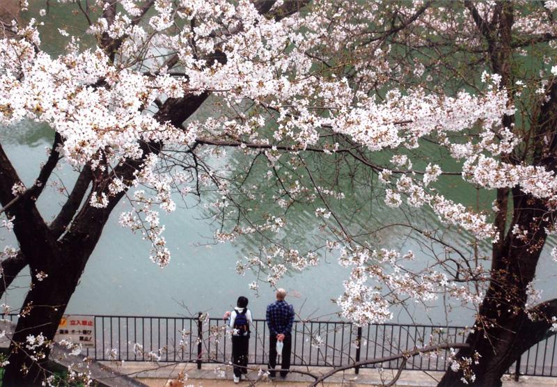 河内長野市長賞 「春を楽しむ」寺ヶ池公園