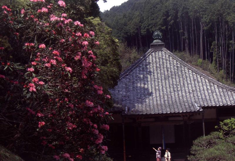 大阪写真材料商業組合理事長賞 「花と仏を訪ねて」清水地蔵寺