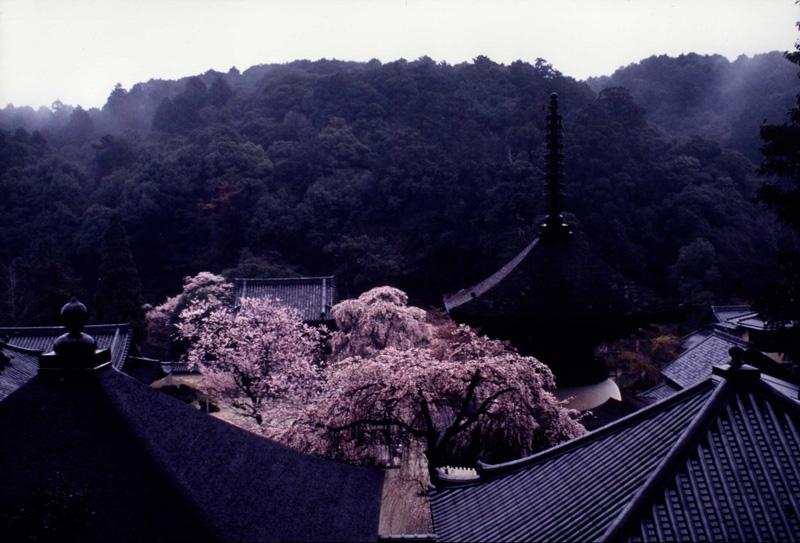 季節賞(春) 「時雨垂れ」天野山金剛寺
