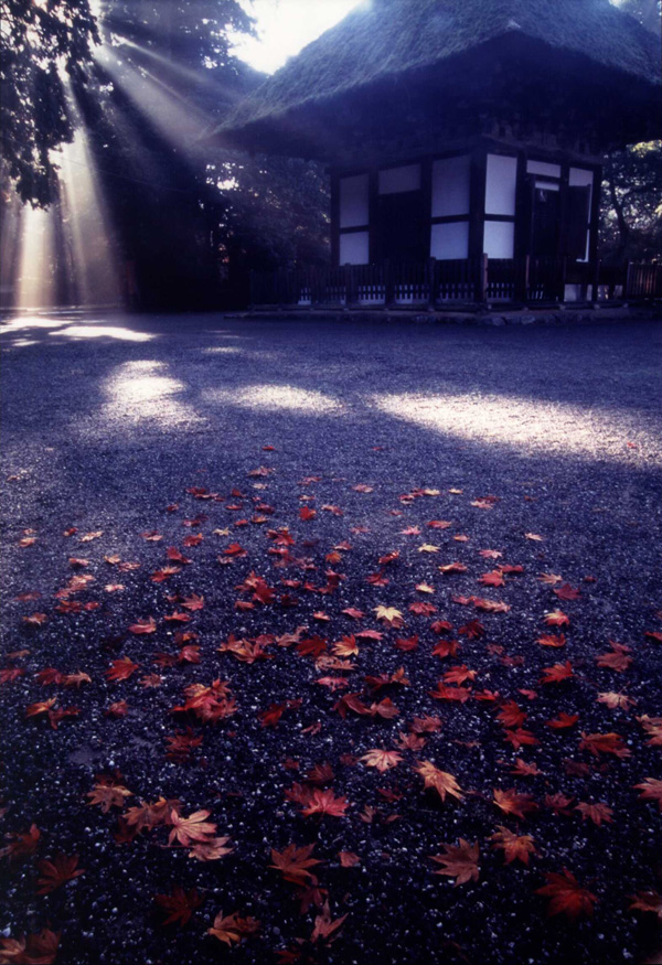 富士フイルム賞 「晩秋の出逢い」観心寺