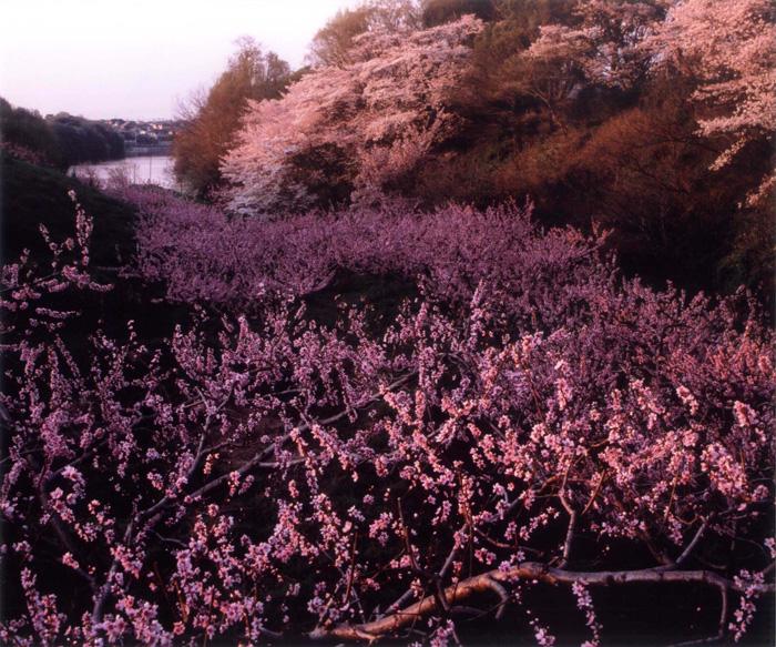季節賞(春) 「寺ヶ池の夕景」寺ヶ池公園