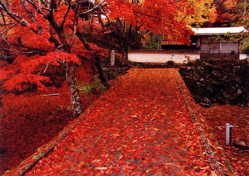大阪観光コンベンション協会長賞 「秋色の参道」地蔵寺