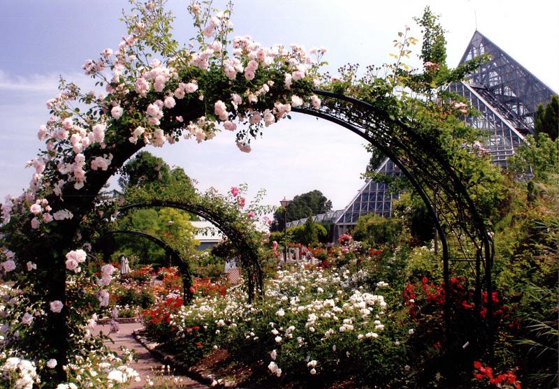 花の文化園フルル賞 「アーチ」花の文化園