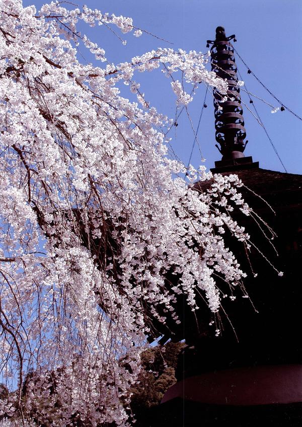 季節賞(春) 「春の金剛寺多宝塔」金剛寺