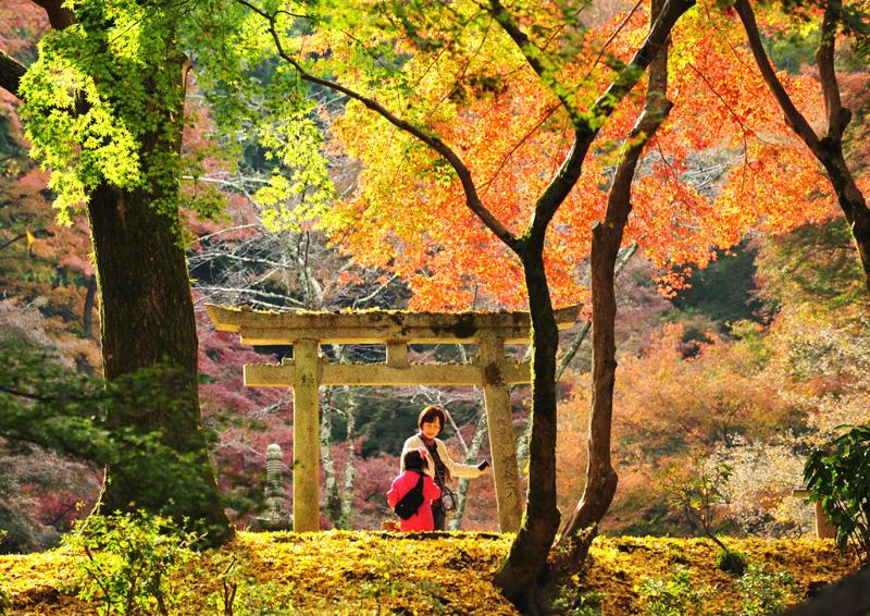 大阪府知事賞 「彩りにさそわれて」延命寺