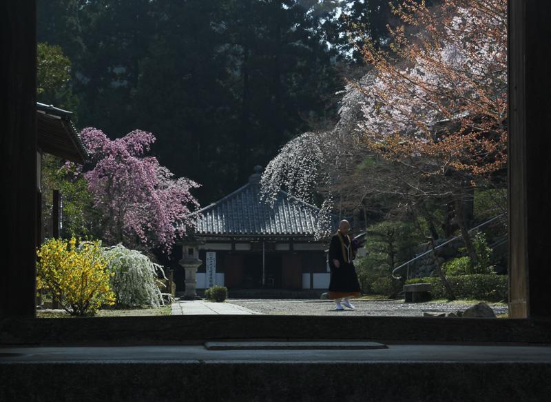 大阪写真材料商業組合理事長賞 「寺の春」延命寺