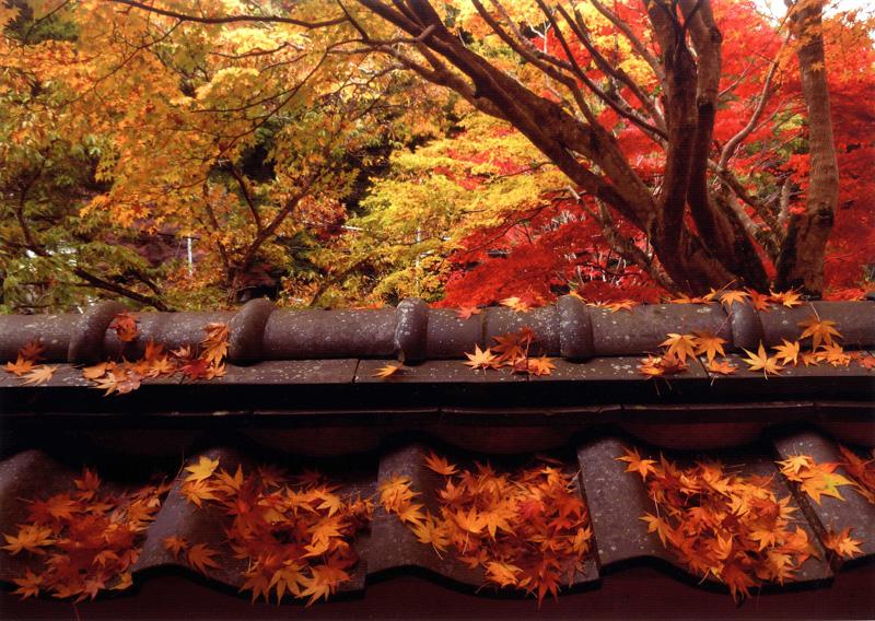 天野酒賞 「秋の彩り」地蔵寺