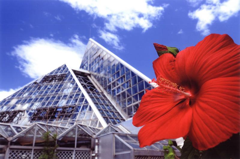 花の文化園フルル賞 「夏のひととき」花の文化園