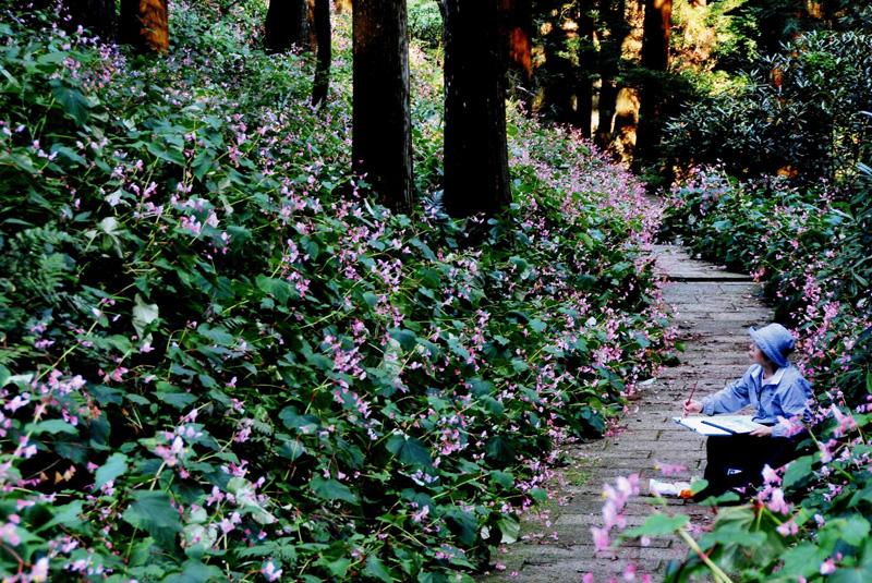 大阪府知事賞 「シュウカイドウに囲まれて」岩湧寺境内