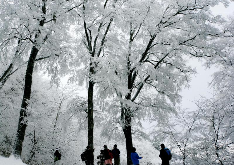 河内長野市観光協会長賞 「樹氷」金剛山