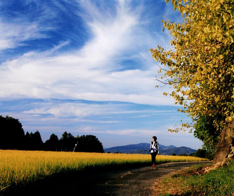 大阪芸術大学賞 「秋色にさそわれて」下赤坂の棚田