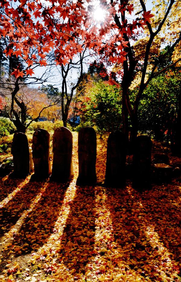 富士フィルム賞 「自然の光背」観心寺