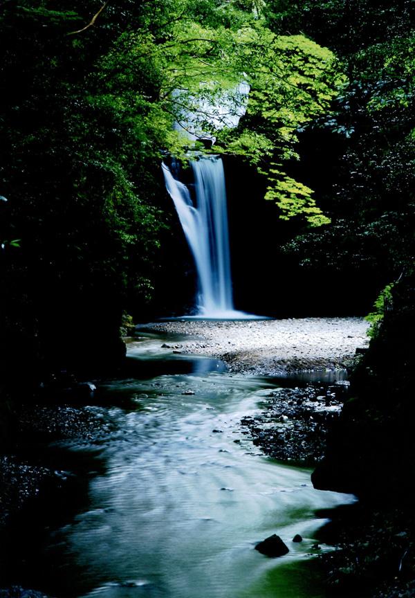 天野酒賞 「緑風光滝」滝畑(光滝)