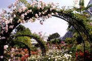 歴史と花コース