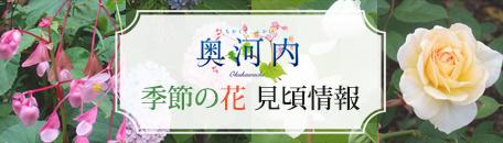 奥河内 季節の花 見頃情報